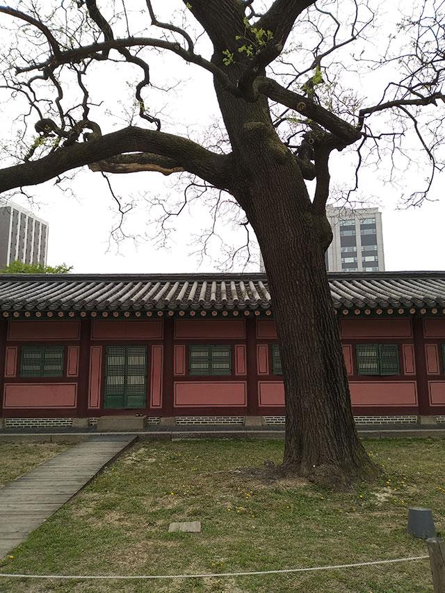 Korea-2018-Seul-Myeongdong-Hongdae-Dongdaemun-Palace-38