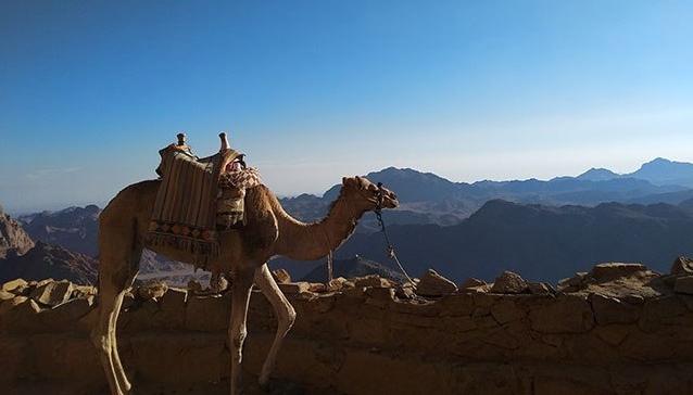 micki-josue-holy-land-tour-jordan-israel-egypt-115-e1550191216701.jpg