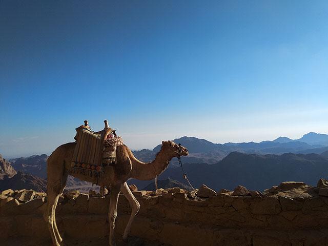 Micki-Josue-Holy-Land-Tour-Jordan-Israel-Egypt-115